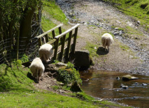 sheep-bridge